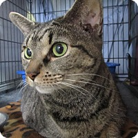 Adopt A Pet :: Sandy - Jackson, MO