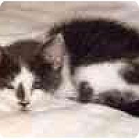 Adopt A Pet :: Angel - Sheboygan, WI