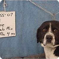 Adopt A Pet :: Joe/Pending - Zanesville, OH