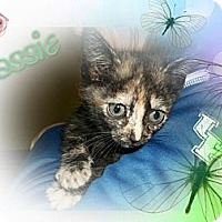 Adopt A Pet :: Cassie - Washington, DC
