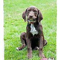 Adopt A Pet :: Tory - Haverhill, MA