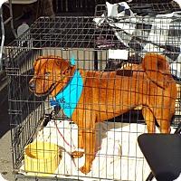 Adopt A Pet :: Aidan - pending - Mira Loma, CA