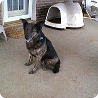 Adopt A Pet :: Babe - Burlington, NJ