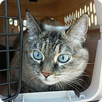 Adopt A Pet :: Remy - Chandler, AZ