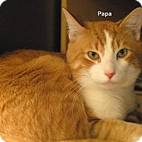 Adopt A Pet :: Popa - McDonough, GA
