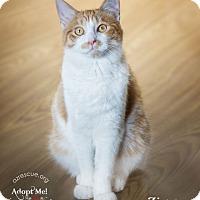 Adopt A Pet :: Ziggy - Phoenix, AZ