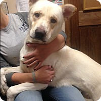 Adopt A Pet :: Champ - Cashiers, NC