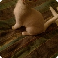 Adopt A Pet :: Coconut - Troy, OH