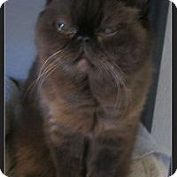 Adopt A Pet :: Khalua - Gilbert, AZ