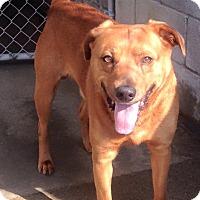 Adopt A Pet :: MAX - Pompton Lakes, NJ