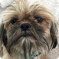 Adopt A Pet :: Misty - St Louis, MO