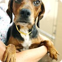 Adopt A Pet :: Laney - Appleton, WI