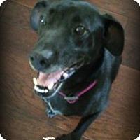 Adopt A Pet :: Emma - Monroe, NC
