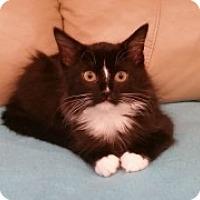 Adopt A Pet :: Calais - McHenry, IL