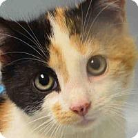 Adopt A Pet :: AVAILABLE SOON! Carmela - Prospect, CT