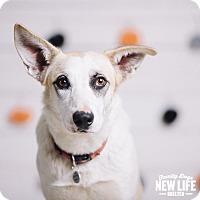 Adopt A Pet :: Corrine - Portland, OR