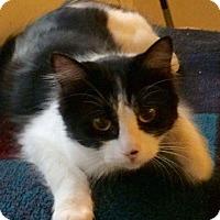 Adopt A Pet :: Renata - Eureka, CA
