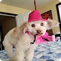 Adopt A Pet :: Buttercup:Ballerina! - Spring City, TN