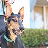 Adopt A Pet :: Nicholas - San Diego, CA