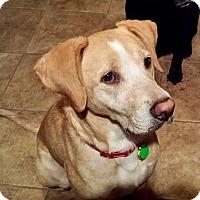 Adopt A Pet :: Saki - Virginia Beach, VA