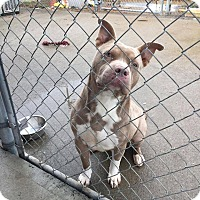 Adopt A Pet :: Gator - Lewisburg, TN