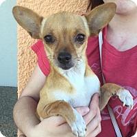 Adopt A Pet :: Browney ADB in TX - Providence, RI