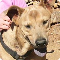Adopt A Pet :: Lukas - Poway, CA