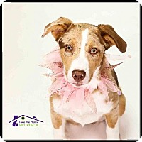 Adopt A Pet :: Olive - Richardson, TX