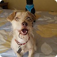 Adopt A Pet :: Fern loves kids & dogs VIDEOS! - LA, CA