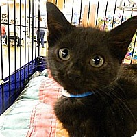 Adopt A Pet :: Phillip - The Colony, TX