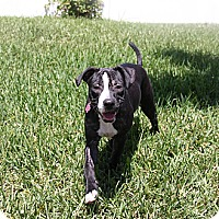 Adopt A Pet :: Macy - Miami, FL