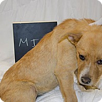 Adopt A Pet :: Mia - Westminster, CO