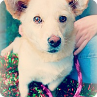 Adopt A Pet :: Holly - Gainesville, FL