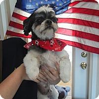Adopt A Pet :: Buddie - Sacramento, CA