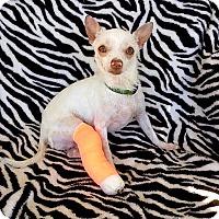 Adopt A Pet :: Marshy - Pasadena, CA