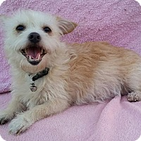 Adopt A Pet :: Tessie - Bellflower, CA
