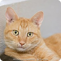 Adopt A Pet :: Fargo - Fountain Hills, AZ