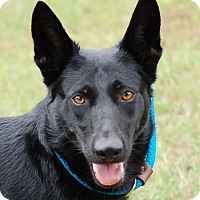 Adopt A Pet :: Bonnie#3 AD 01-09-16 - Preston, CT