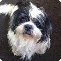 Adopt A Pet :: Bricktown NJ - Arnie - New Jersey, NJ