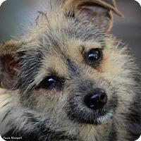 Adopt A Pet :: Cherry Pie - Toluca Lake, CA