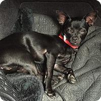 Adopt A Pet :: Frieda - San Jose, CA