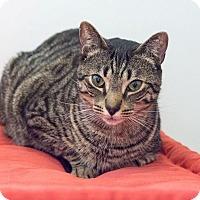 Adopt A Pet :: Elijah - New York, NY