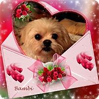 Adopt A Pet :: Bambi - Crowley, LA
