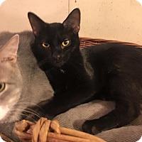 Adopt A Pet :: Jordan - Baltimore, MD