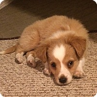 Adopt A Pet :: Lola's Jimminy - Adoption Pending! - Potomac, MD