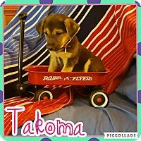 Adopt A Pet :: Takoma - Scottsdale, AZ