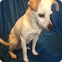 Adopt A Pet :: Geena - San Leandro, CA