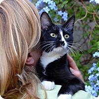 Adopt A Pet :: Blazie - San Jose, CA