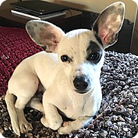 Adopt A Pet :: George - Oakland, CA