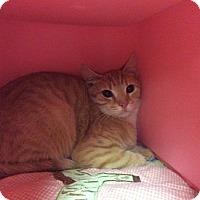 Adopt A Pet :: Samwise Gamgee - Janesville, WI